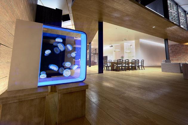 Cubic-Pulse-80-Jellyfish-Aquarium-4
